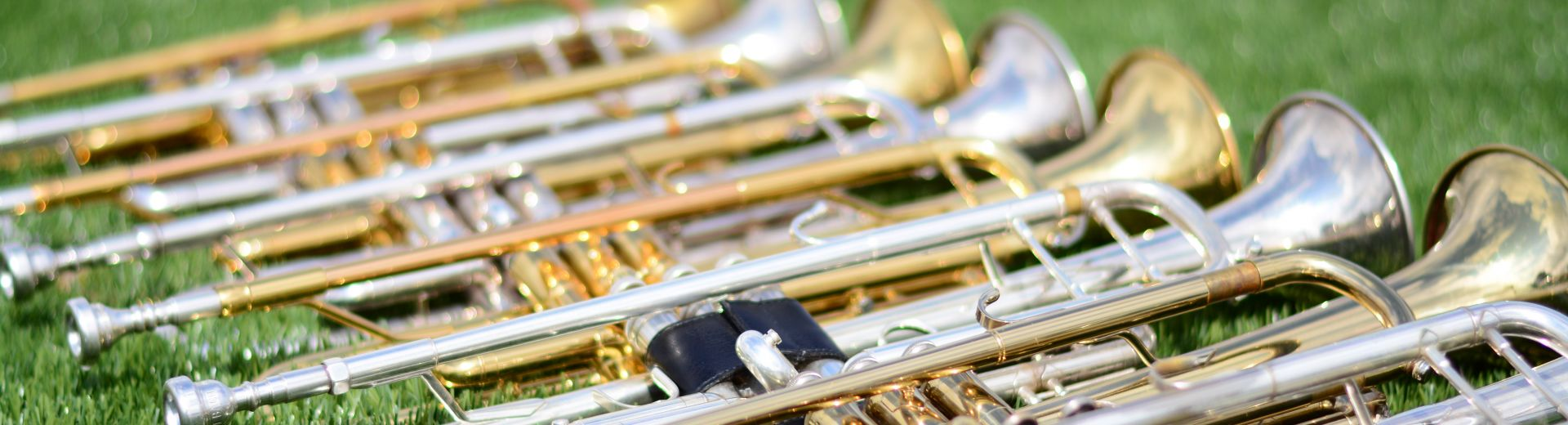 Trumpets lined up on grass